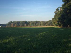 Land Auction!